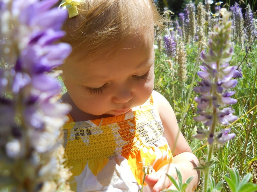 child-lavender-herbal-medicine
