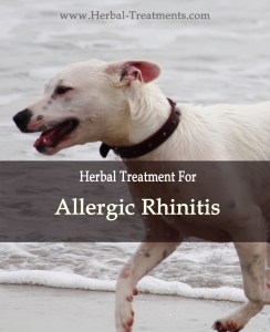 Allergic Rhinitis in Dogs