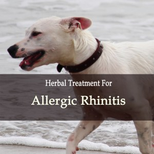 Allergic Rhinitis in Dogs