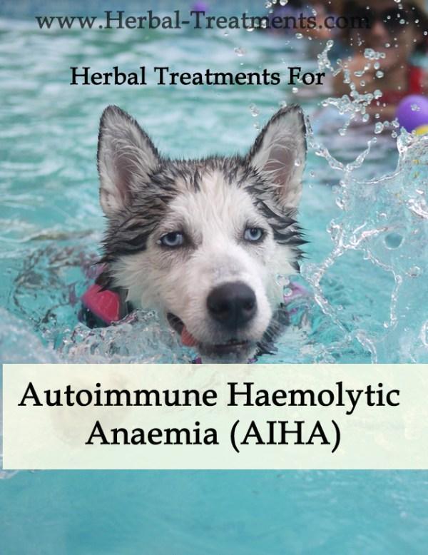 Herbal Treatment for Autoimmune Haemolytic Anaemia (AIHA) in Dogs