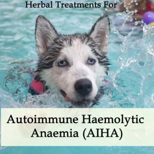 Herbal Treatment for Autoimmune Haemolytic Anaemia (AIHA) in Dogs