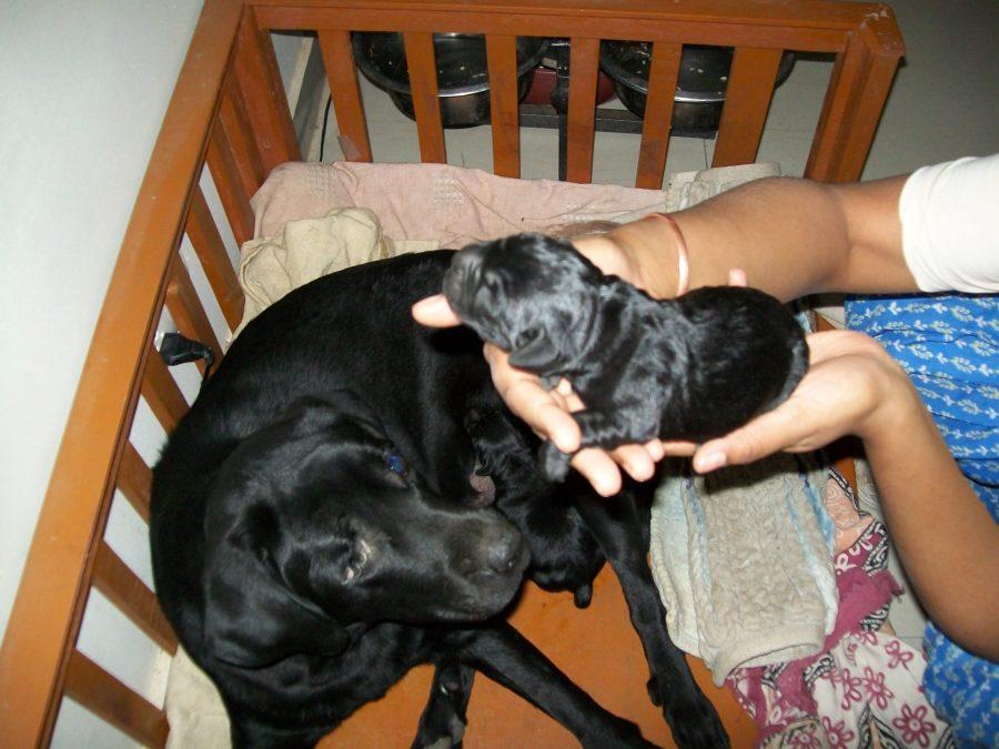 dog-birth-herbal-medicine