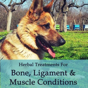 Herbal Treatments for Canine Bone, Ligament, Muscle Conditions