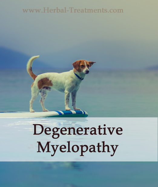 Herbal Treatment For Degenerative Myelopathy in Dogs