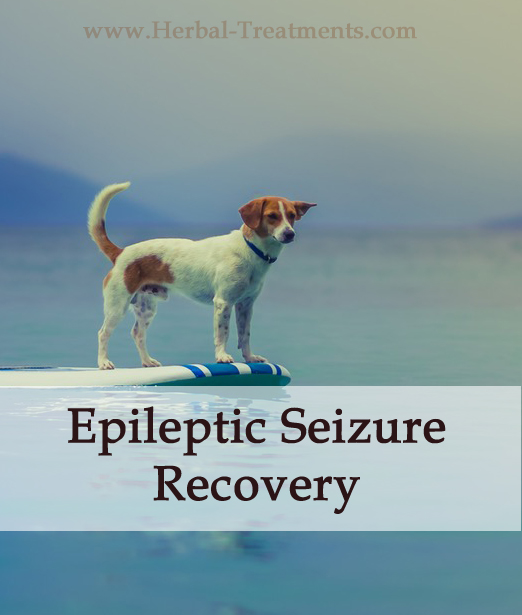 Herbal Treatment for Epileptic Seizure/ Fits Recovery in Dogs