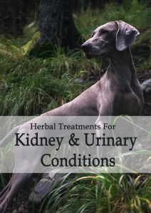 Herbal Treatments for Canine Kidney and Urinary Conditions