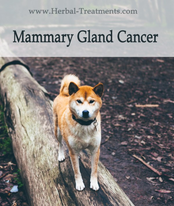 Herbal Treatment for Cancer - Mammary Gland Cancer in Dogs