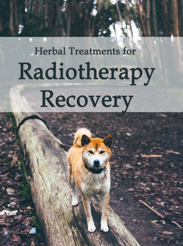 Herbal Treatment For Cancer Radiotherapy Side-effects & Recovery for Dogs