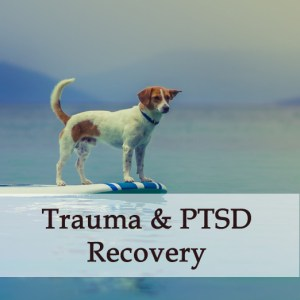 Herbal Treatment For Trauma & PTSD Recovery for Dogs
