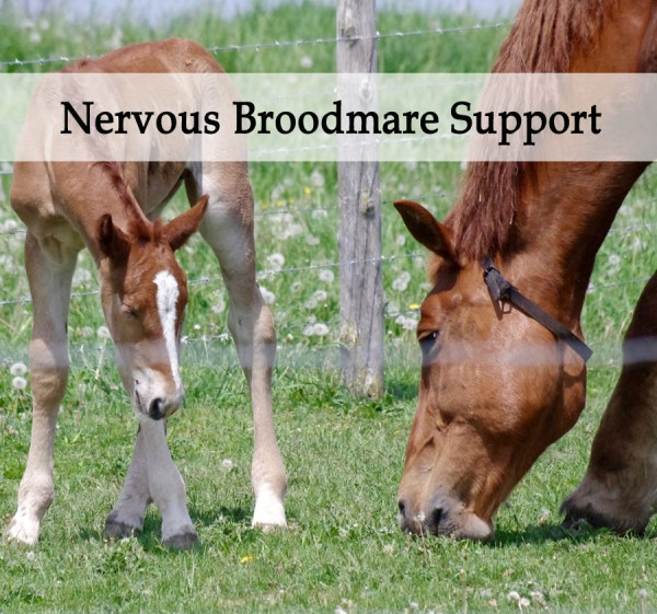 Herbal Treatment - Nervous Broodmare Support