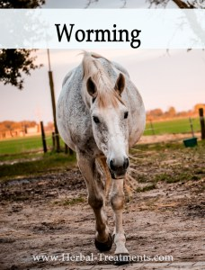Herbal Treatments for Equine Worming