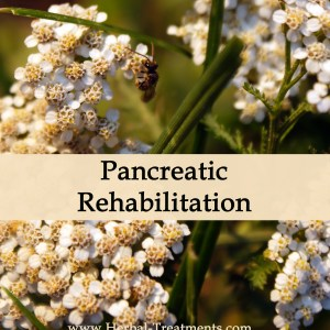 Herbal Medicine for Pancreatic Recovery & Rehabilitation
