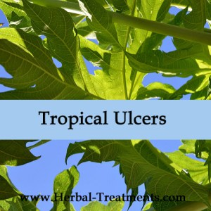 Herbal Medicine to treat Tropical Ulcers