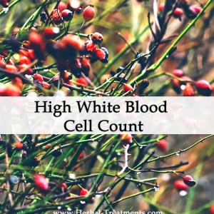 Herbal Medicine for a High White Blood Cell Count