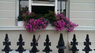 July: flower box in Bayswater, London