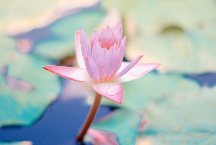 Inner Peace with Holistic Faith Lifestyle