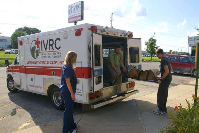 Pet Ambulance.jpg