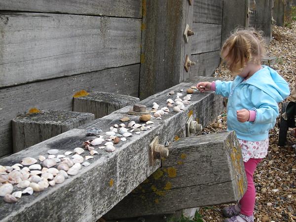 Flora arranges her new shells