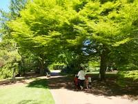 MAS-2012-05-28-IMG_8310