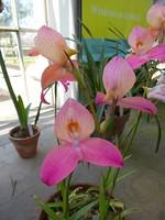 MAS-2012-05-28-IMG_8366