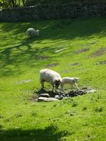 MAS-2012-05-22-IMG_6974