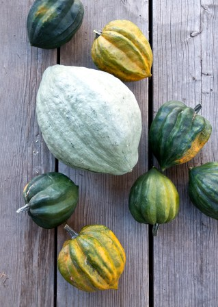 The one blue hubbard squash and seven of about 20 acorn squashes from two vines.