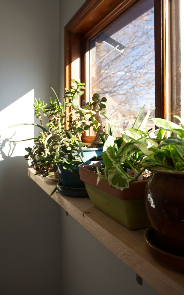 The new home for eight of our sun-loving houseplants.