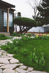Tulips and daffodils along the makeshift pathway in our front yard. We busted out an old concrete pathway to make this archway, and we planted about 250 bulbs this past fall along the walkway.