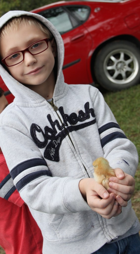 They loved holding the baby chicks!  They visited the pen several times.