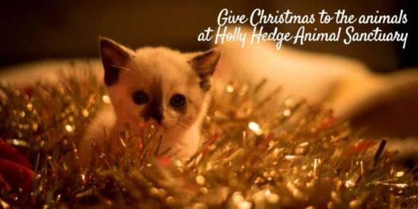 Give Christmas To Our Animals Holly Hedge Animal Sanctuary
