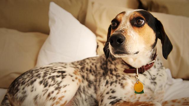 'Lost Dog' Guest Post on DorriOlds.com