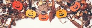 Festivais de outono do Arizona |  Holly's Bird Nest 2