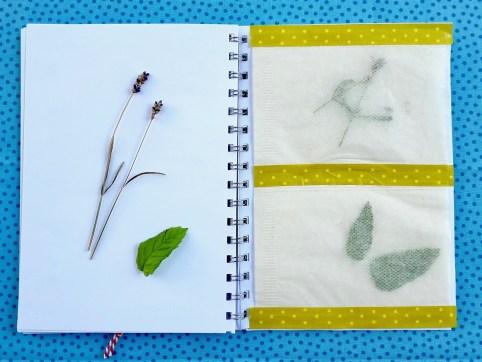 6_Pflanzen