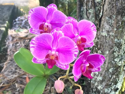 Purple orchids - God loves them first, too.