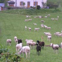 typical french pastoral scene