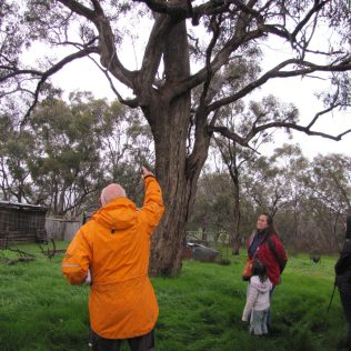 Gerry Gill with ancient marker tree