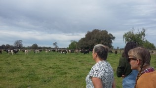 The herd at the Kyabram workshop