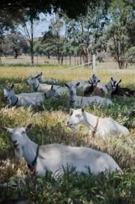 Obsalim Spring workshops, Holy Goat November 2017