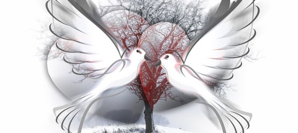 dangerous love, two peace doves on Valentine's Day