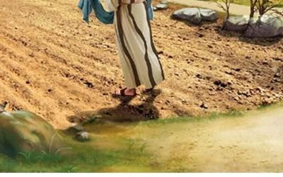 15TH SUNDAY IN ORDINARY TIME: BARREN LAND OR FERTILE SOIL?