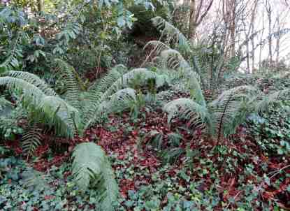 Area rich in ferns