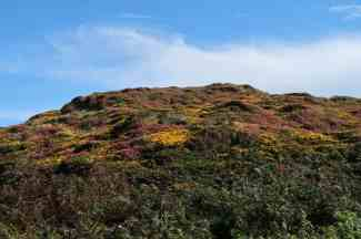 Heather and gorse still brilliantly coloured
