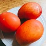 実はトマトが紛れているお皿に乗った完熟マンゴーとトマト