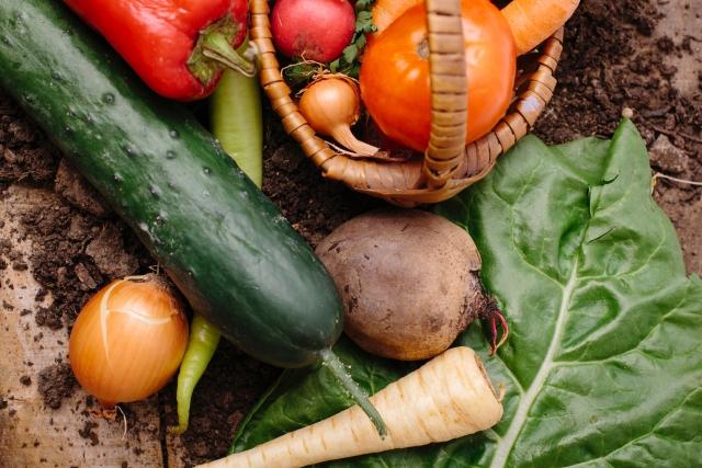 土の付いた夏野菜盛り合わせ