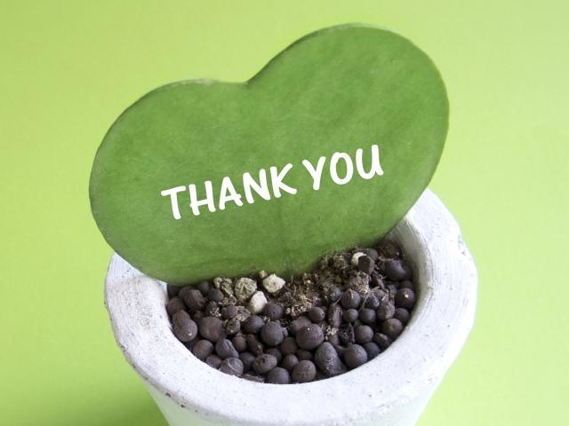 THANK YOUと書かれた鉢植えの観葉植物