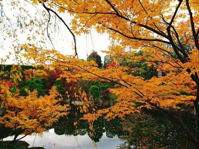 目白庭園の紅葉