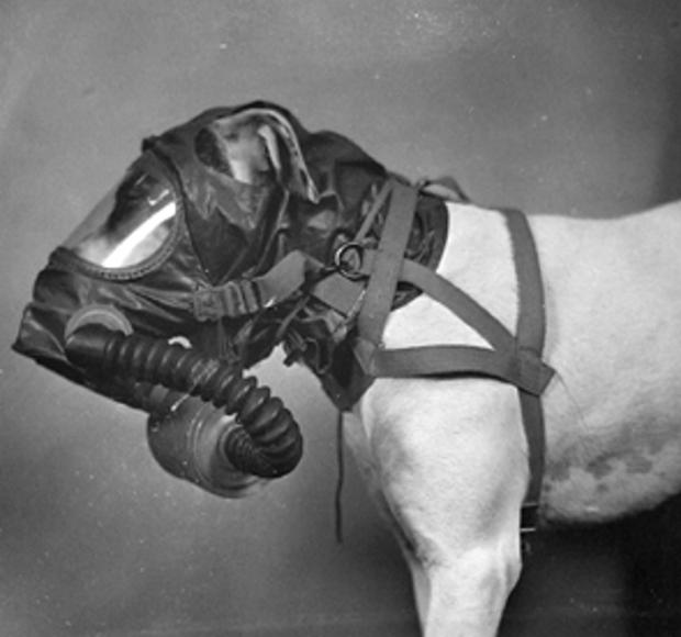 20080823170438 Evolución de las máscaras de gas para perros