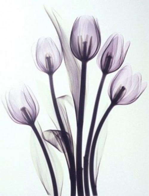 tulipsb13color 001