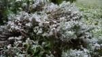 Nieve recién caída