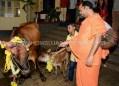 Hombuja-Humcha-Jain-Math-Deepawali-Govu-Cow-Pooja-2018-0008